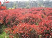 南京綠浦苗圃場