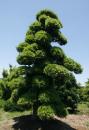 四川幸福林苗木